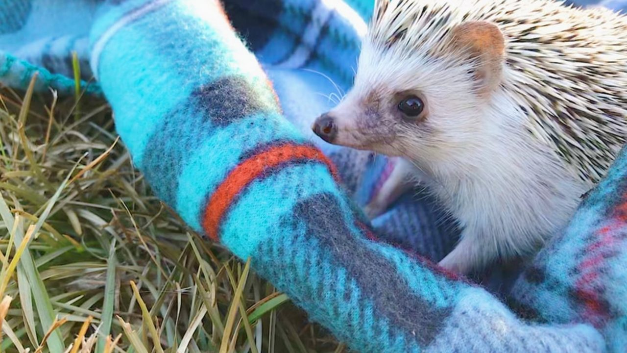 https://japaneserealestate.co.jp/wp-content/uploads/2020/02/Hedgehog-1280x720.jpg
