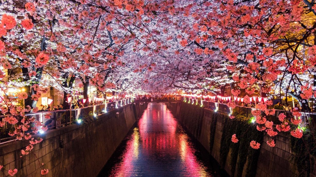 https://japaneserealestate.co.jp/wp-content/uploads/2020/03/Cherry-Blossoms-1280x720.jpg